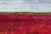 Blueberry-Fields-2 by Christine Hager-Braun