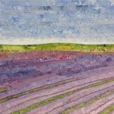 Lavender Fields #5