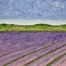 Lavender Fields #8